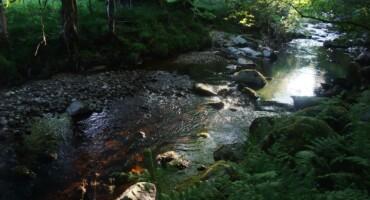 Biodiversity Plan: An Oige Knockree
