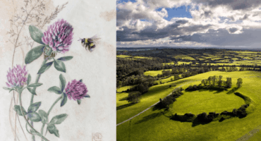 Botanical painting for beginners at the Devenish Lands at Dowth