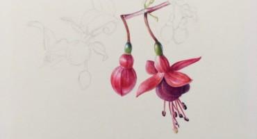Botanical art workshop: Hedgerow Wild & Beautiful