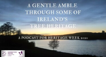A Gentle Amble Through Some of Ireland's Tree Heritage.