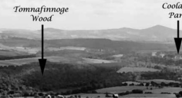 Coolattin Estate - A guided walk in Tomnafinogue Woods