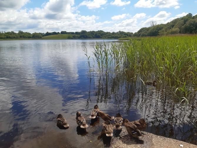 Clondorney Lake Family Fun Day (Tulla, Co. Clare)