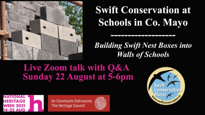 Swift Conservation at Schools in Co. Mayo